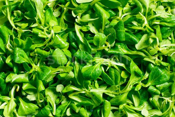 кукурузы Салат салата текстуры группа завода Сток-фото © jirkaejc