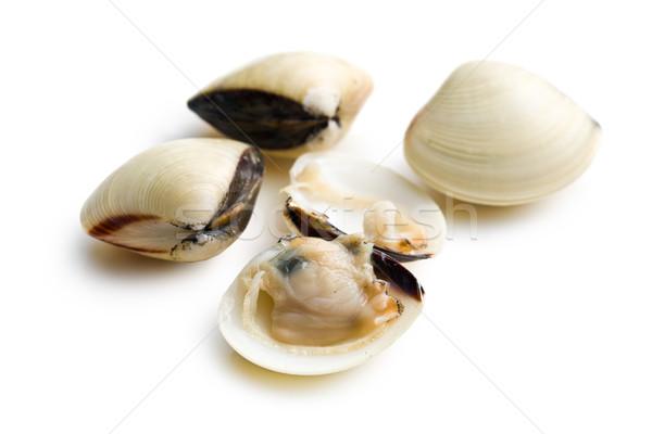 fresh clams Stock photo © jirkaejc