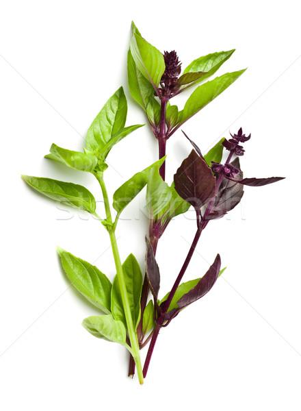 varied basil leaves Stock photo © jirkaejc