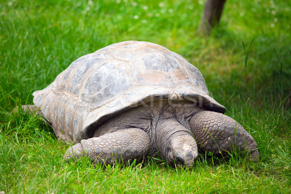 óriás teknősbéka fotó lövés természet alszik Stock fotó © jirkaejc