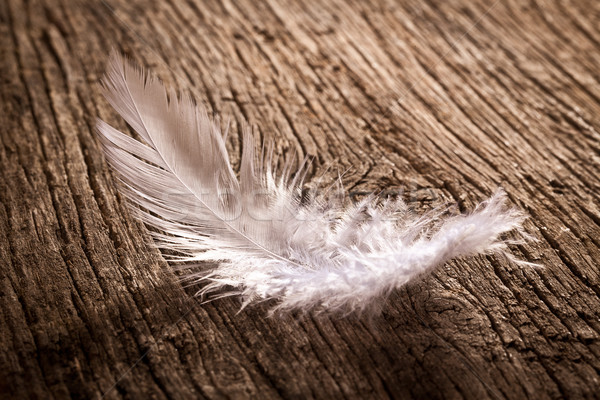 feather on old wooden desk Stock photo © jirkaejc