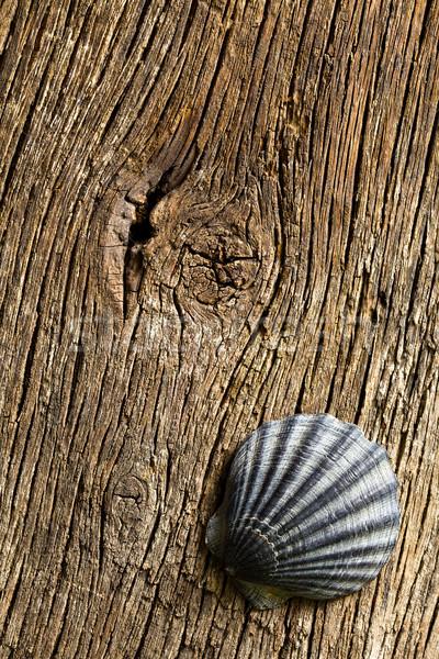 sea shell on old wooden table Stock photo © jirkaejc
