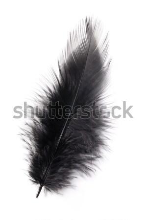 black feather Stock photo © jirkaejc