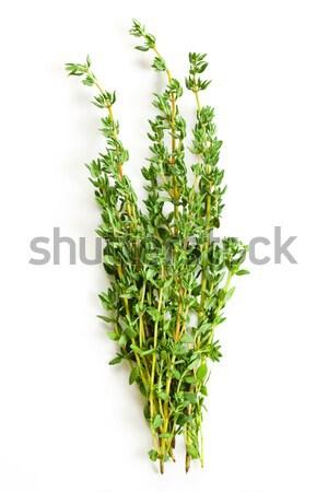 thyme herb Stock photo © jirkaejc