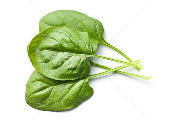 Groene spinazie bladeren witte voedsel tuin Stockfoto © jirkaejc