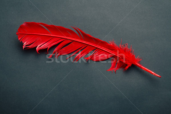 red feather Stock photo © jirkaejc