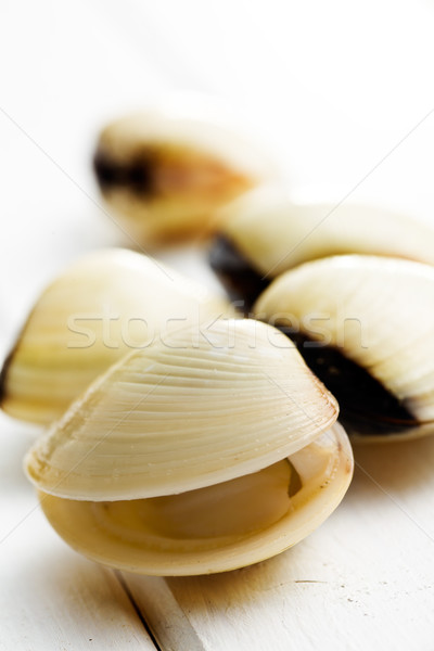 Brut blanche bois alimentaire fond shell Photo stock © jirkaejc