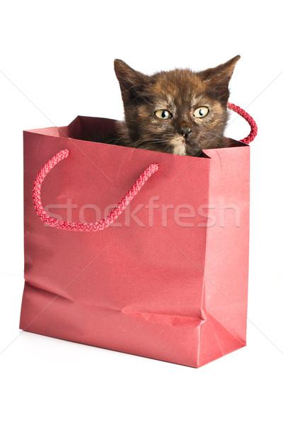 Küçük kedi yavrusu hediye çanta portre genç Stok fotoğraf © jirkaejc
