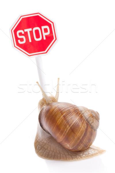 Stockfoto: Tuin · slak · stoppen · verkeersbord · huis · voedsel
