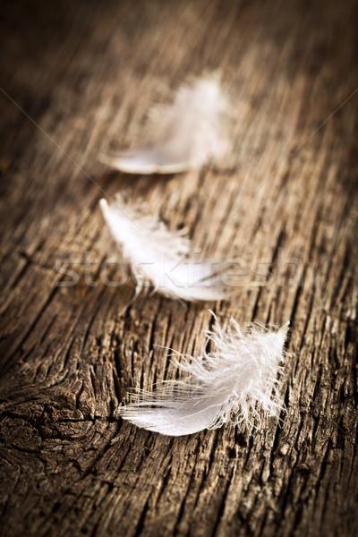 Beyaz tüy bağbozumu büro ışık hayvan Stok fotoğraf © jirkaejc