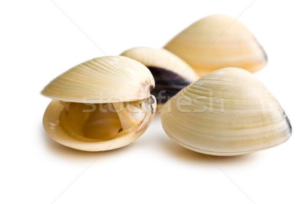 Fraîches alimentaire shell blanche repas saine Photo stock © jirkaejc
