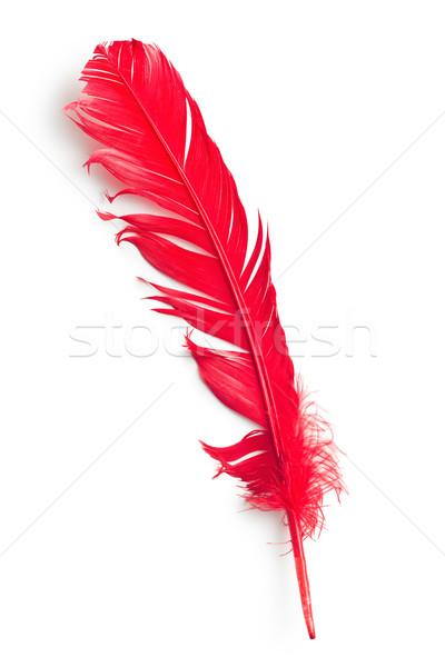 Kırmızı tüy beyaz soyut kuş uçmak Stok fotoğraf © jirkaejc