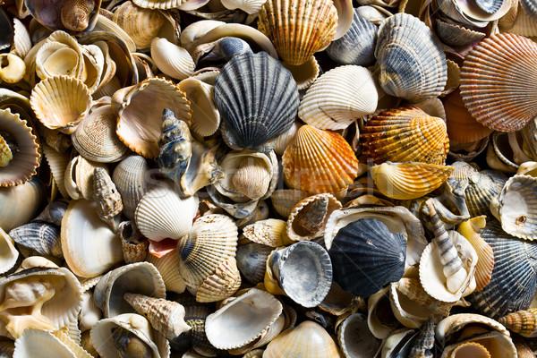 sea shell background Stock photo © jirkaejc