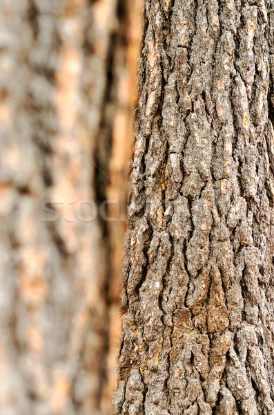 Atención selectiva corteza árbol textura forestales diseno Foto stock © jkraft5