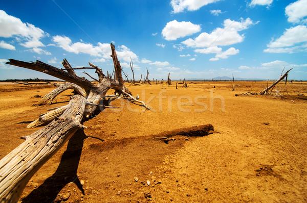 A Fallen Tree in a Desert Stock photo © jkraft5