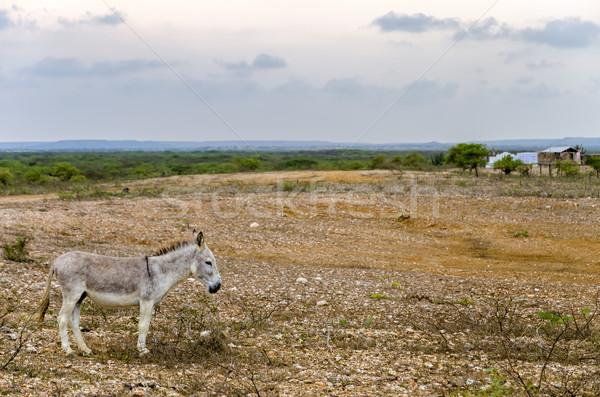 Szürke szamár száraz terméketlen tájkép mező Stock fotó © jkraft5