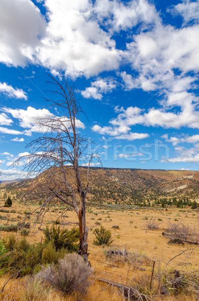 Dry Landscape Stock photo © jkraft5