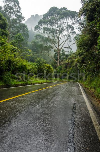 út ködös erdő vezető buja köd Stock fotó © jkraft5