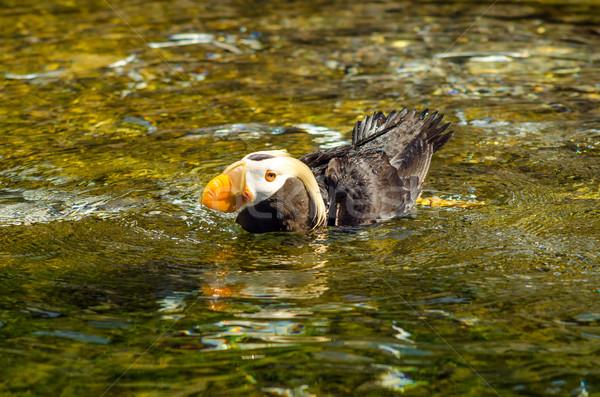 Wody ptaków basen piękna pomarańczowy ocean Zdjęcia stock © jkraft5