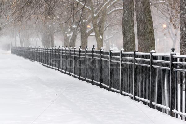 Chicago hóvihar park út erdő tájkép Stock fotó © jkraft5