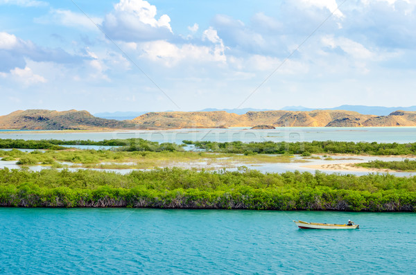 Mangroves and Boat Stock photo © jkraft5