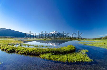 Vrijgezel reflectie bos meer weide Stockfoto © jkraft5