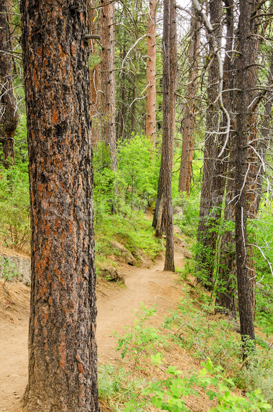 Hiking Trail Stock photo © jkraft5