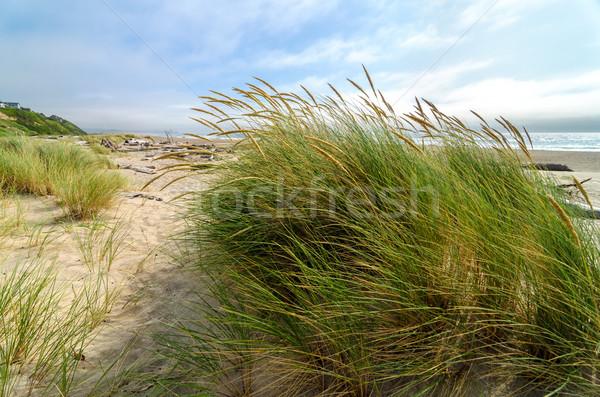 Plaży trawy wiatr Oregon wybrzeża Zdjęcia stock © jkraft5