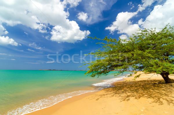 Beach and Tree Stock photo © jkraft5