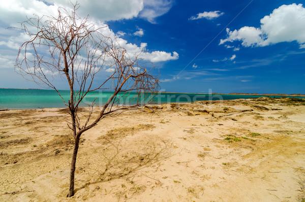 Toter Baum Strand verlassen Karibik Landschaft Stock foto © jkraft5