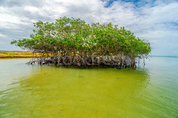 Wody drzewo wybrzeża la krajobraz morza Zdjęcia stock © jkraft5