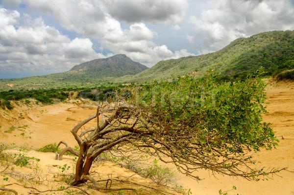 árbol duna crecer parque Foto stock © jkraft5