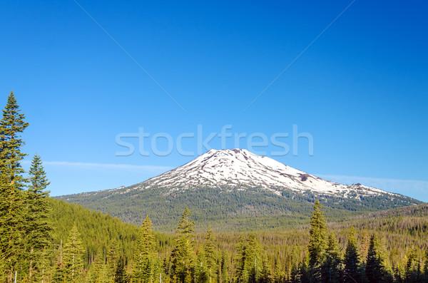 Vrijgezel bos vroeg zomer mooie Stockfoto © jkraft5