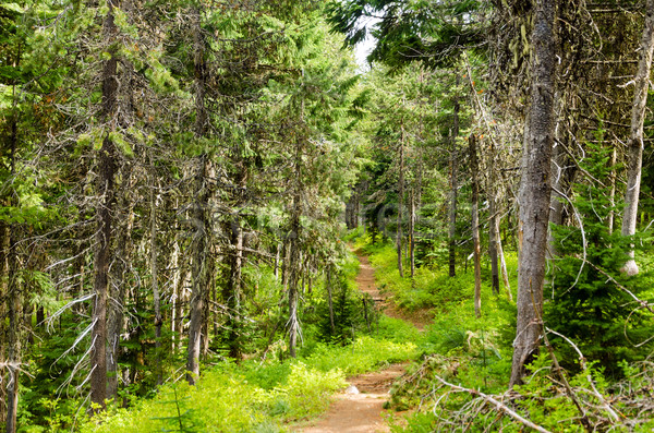 Forest Path Stock photo © jkraft5