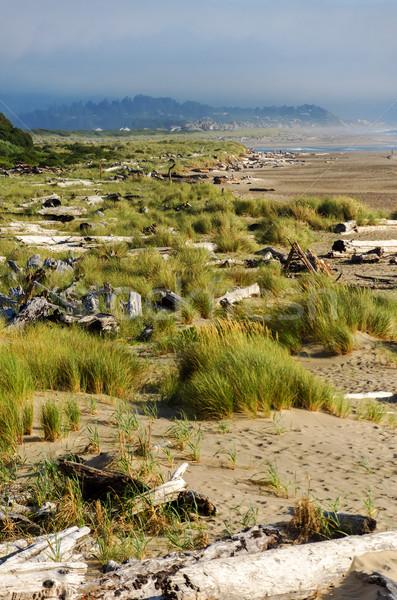 Driftwood trawy widoku Oregon wybrzeża miasta Zdjęcia stock © jkraft5