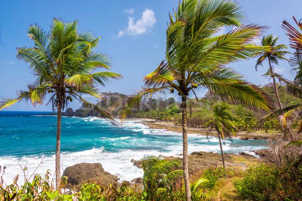 Palm niebieski morza Karaibów lasu Zdjęcia stock © jkraft5