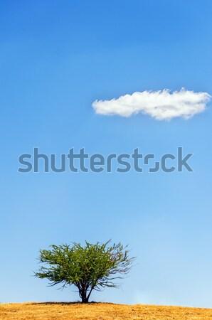 Egyedüli fa felhő kék ég háttér szépség Stock fotó © jkraft5