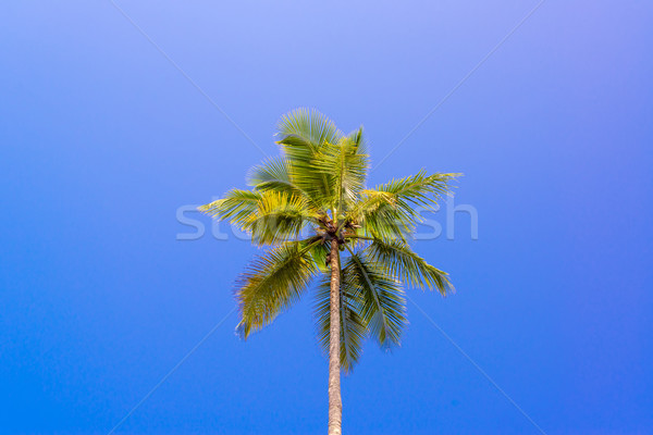 One Palm Tree Stock photo © jkraft5