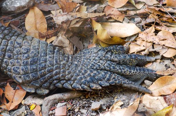 Krokodil mancs közelkép kilátás láb állatkert Stock fotó © jkraft5