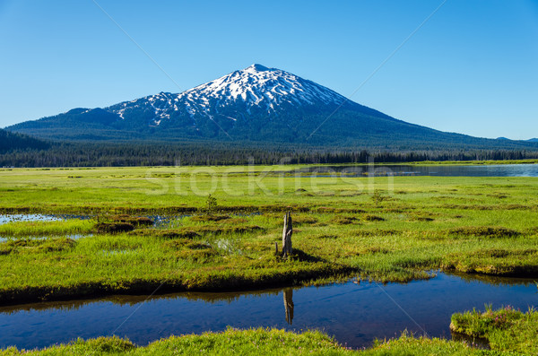Vrijgezel weide weelderig groene centraal Oregon Stockfoto © jkraft5