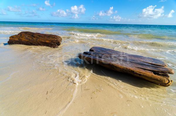 Tropikalnych driftwood mycia w górę brzegu Karaibów Zdjęcia stock © jkraft5