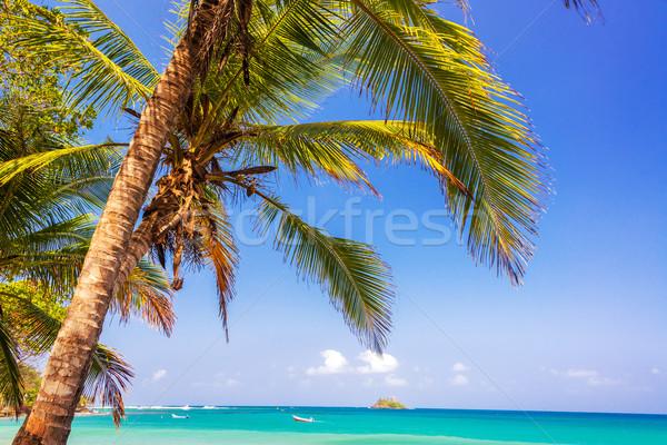 Zdjęcia stock: Palma · Karaibów · widoku · niebieski · turkus · morza