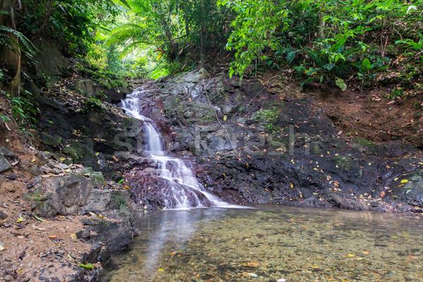 Vízesés kicsi sűrű trópusi esőerdő természet Stock fotó © jkraft5