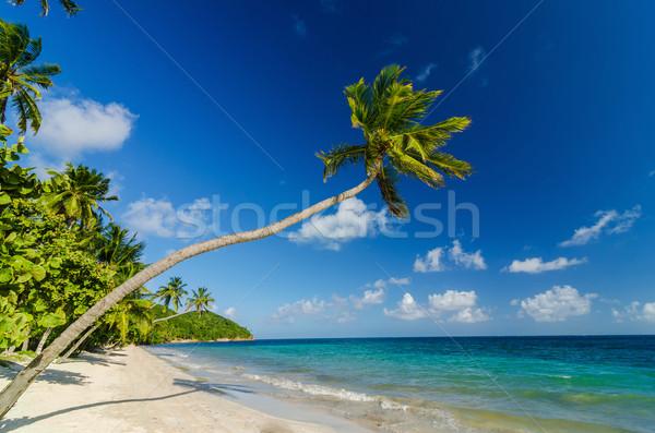 Palma plaży biały piasek turkus Karaibów morza Zdjęcia stock © jkraft5