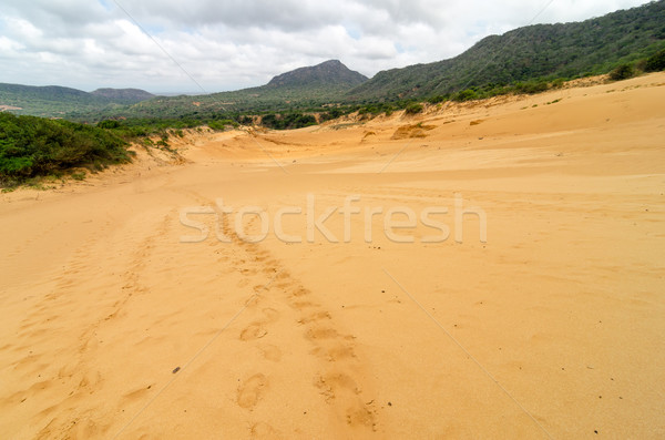 Huellas duna hasta parque naturaleza Foto stock © jkraft5