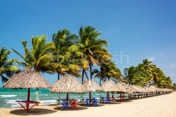Zeile Palmen entspannen Karibik Küste Wald Stock foto © jkraft5