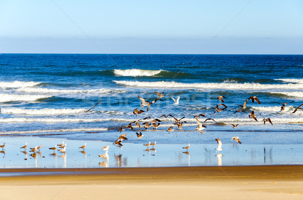 Seagulls on a Beach Stock photo © jkraft5
