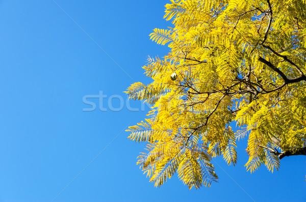 Yellowish Leaves Stock photo © jkraft5