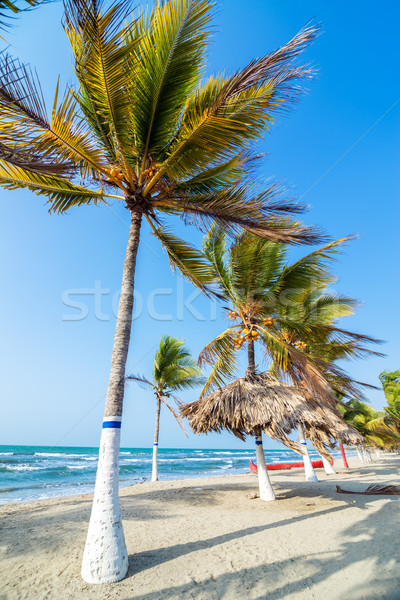 Strand palmbomen rij bos natuur landschap Stockfoto © jkraft5