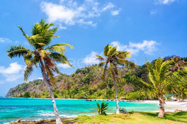 üç palmiye ağaçları Panama yukarı turkuaz caribbean Stok fotoğraf © jkraft5
